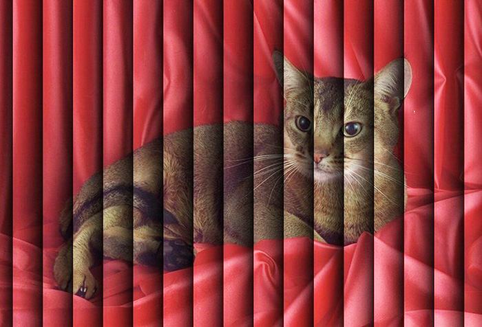 Вертикальные жалюзи с изображением кошки