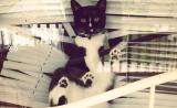 Кот, сломавший жалюзи
