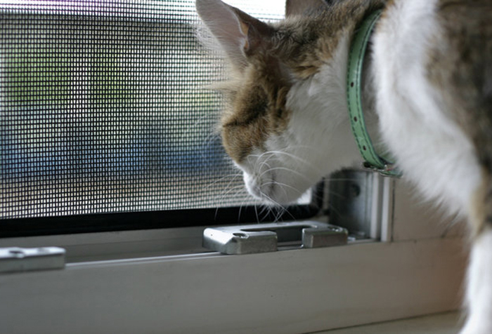 Кошка у окна с защитной сеткой